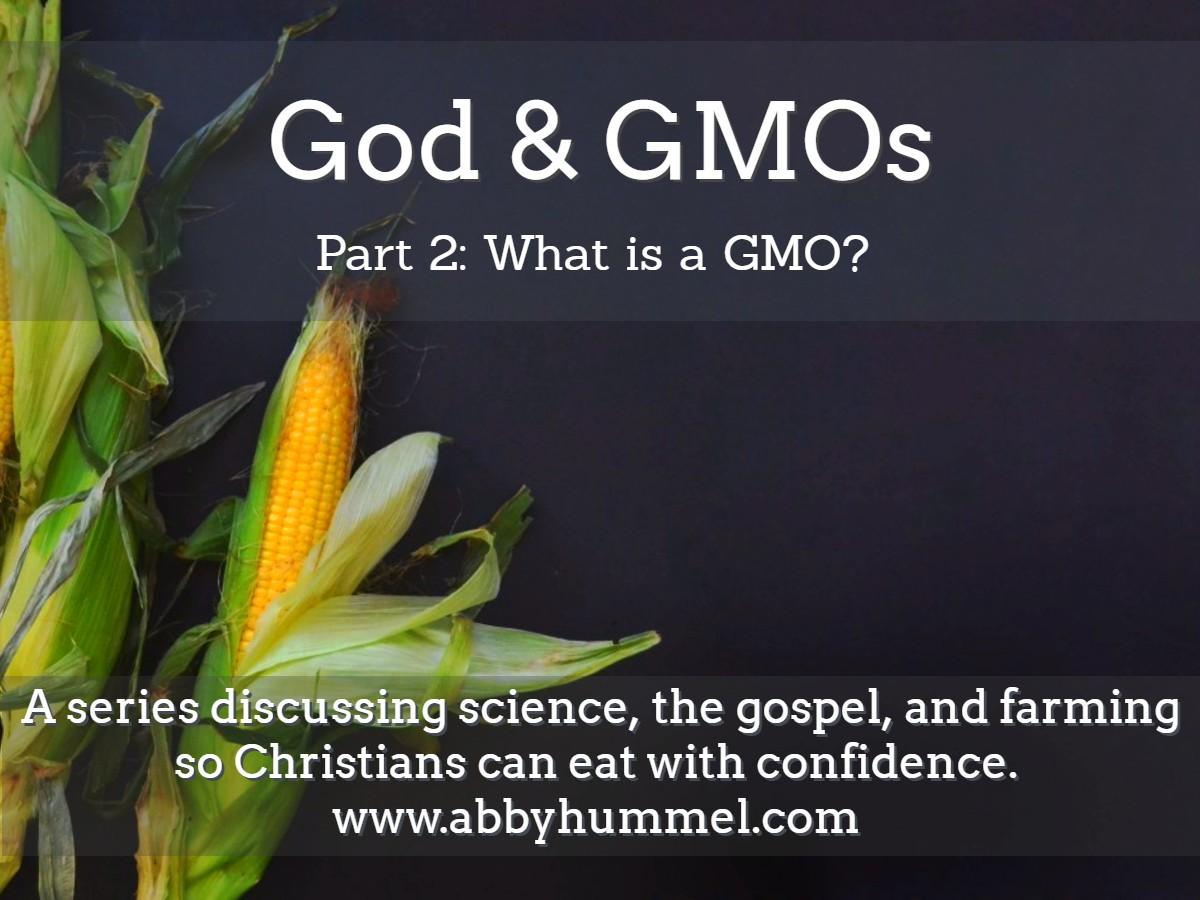 God & GMOs: What is a GMO? | abby hummel